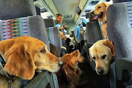 viajando con <b>mascotas</b> barcelona